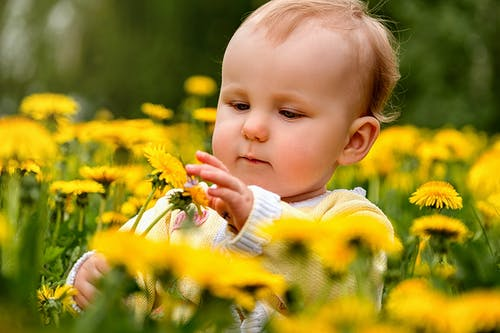 Cute little girl with short blond hair playing with yellow dandelions sitting in blooming meadow on sunny day