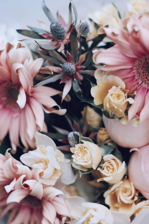 Gratis stockfoto met arrangement, blad, bloeiend, bloem