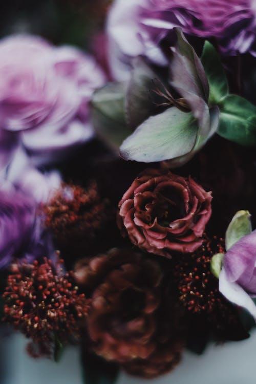 คลังภาพถ่ายฟรี ของ กลีบดอก, กลีบดอกไม้, การจัดเรียง, การจัดแจง