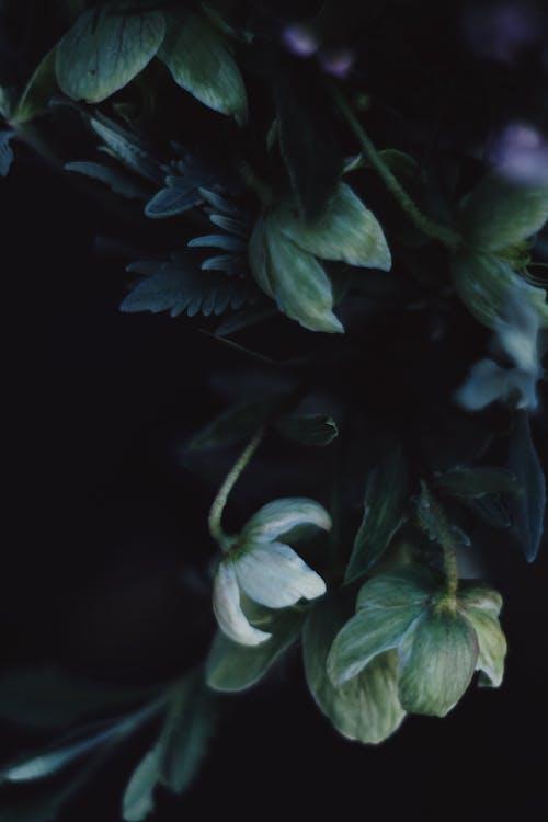 Darmowe zdjęcie z galerii z biały, botaniczny, delikatny