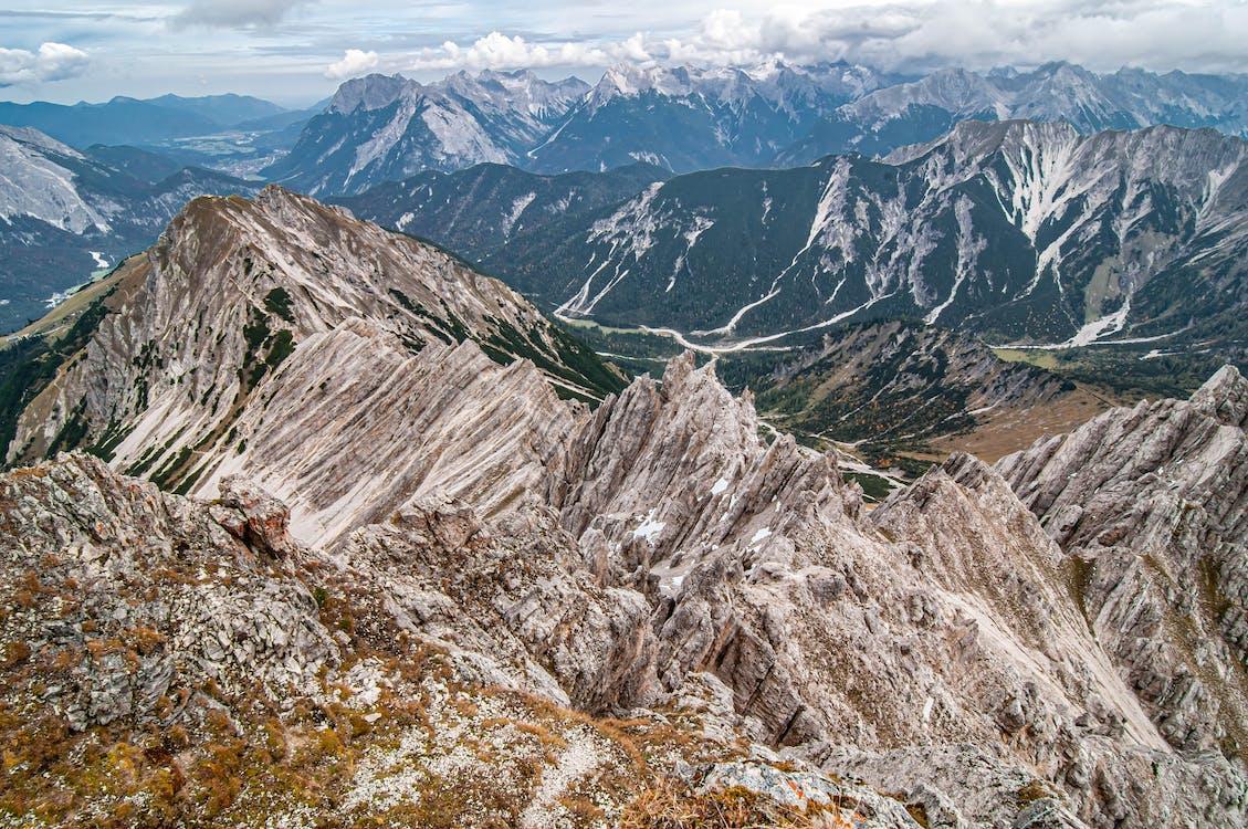 Persebaran flora dan fauna di daerah tundra