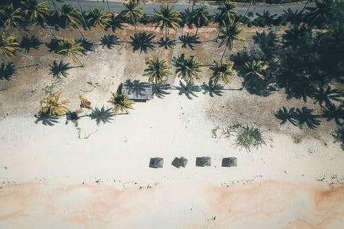 Bird's Eye View Of Coconut Trees