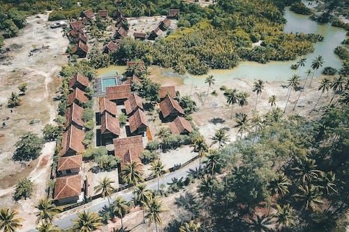 Immagine gratuita di alberi, alberi di cocco, ambiente