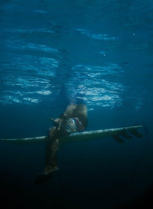 Δωρεάν στοκ φωτογραφιών με extreme sport, Surf, surfrider, Αθλητισμός