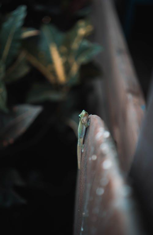 Photo Of Lizard On Board