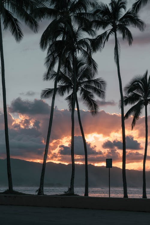 Photo Of Palm Trees During Dawn