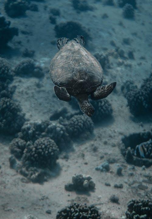 거북이, 경치가 좋은, 깊은, 동물의 무료 스톡 사진