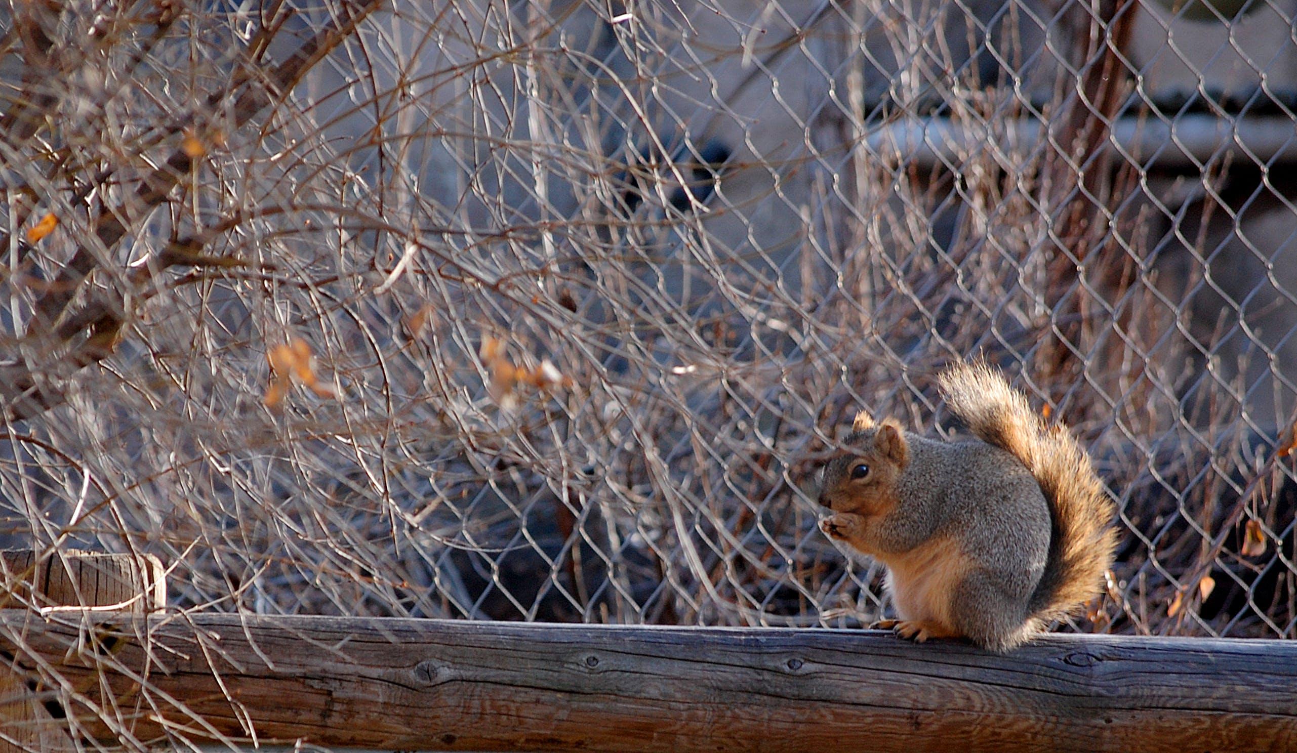 Kostenloses Stock Foto zu eichhörnchen