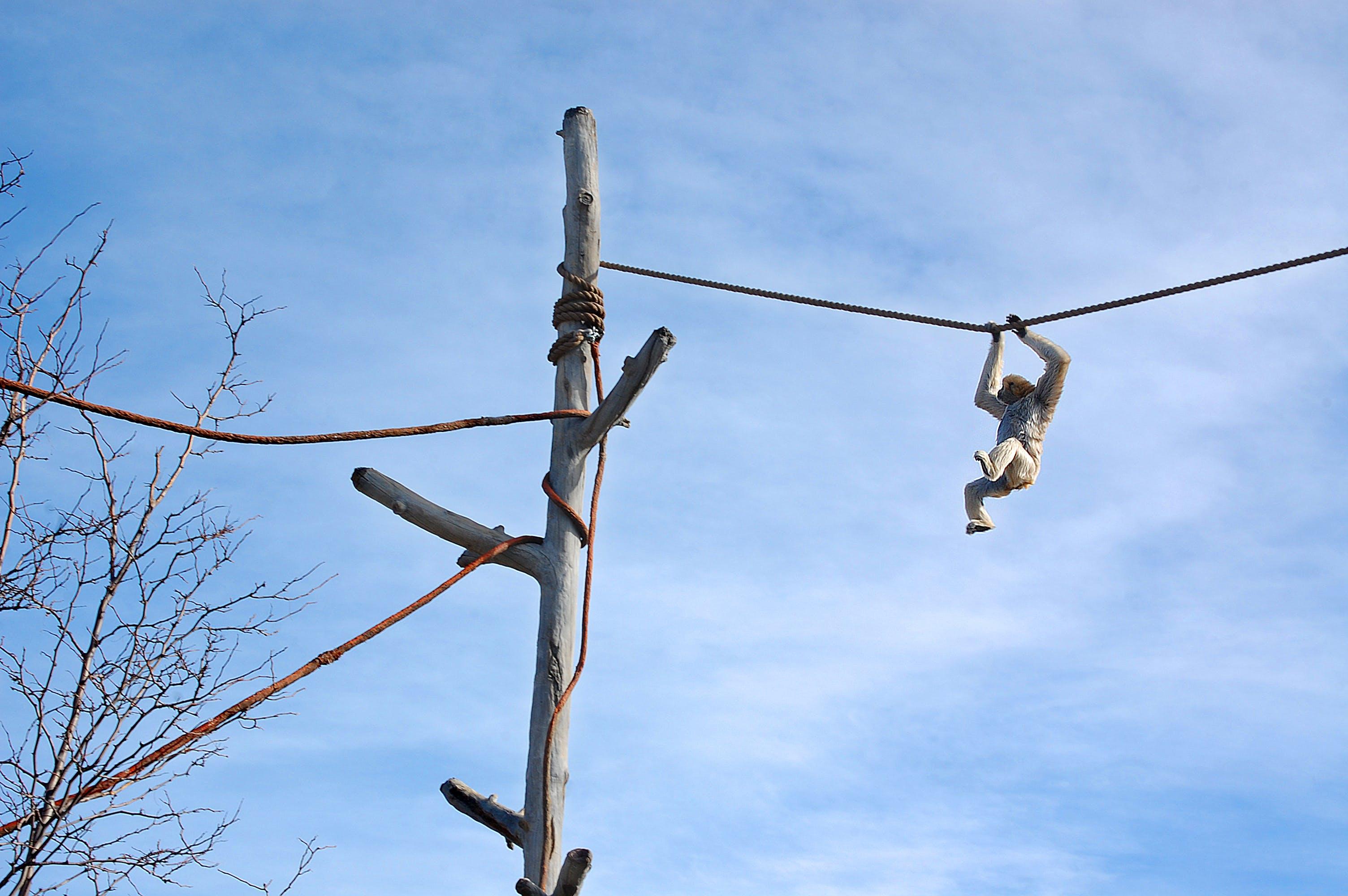 Free stock photo of Denver, monkey, zoo