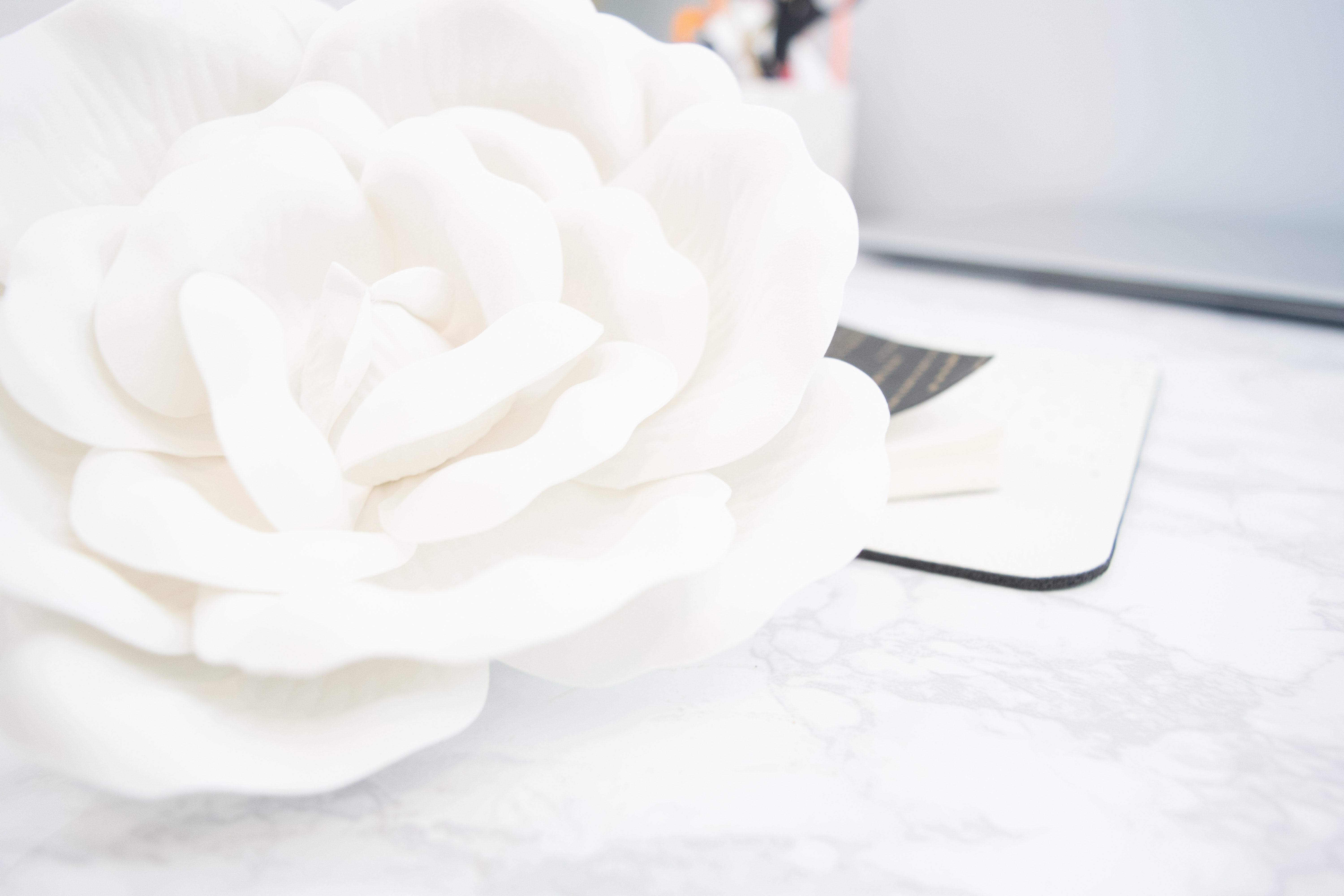 1000 Great White Rose Photos Pexels Free Stock Photos