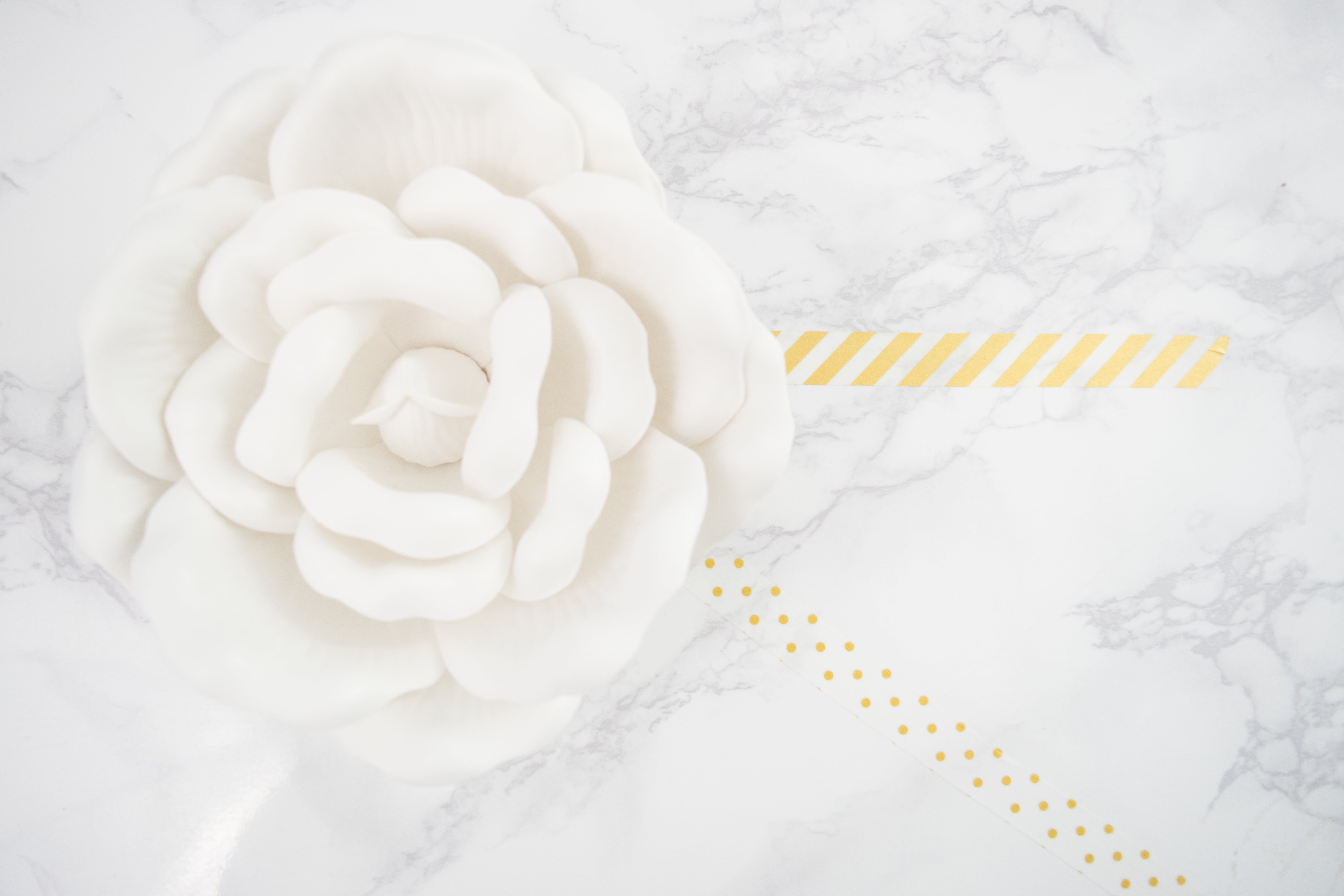 Free stock photo of gold, marble surface, rose, white rose