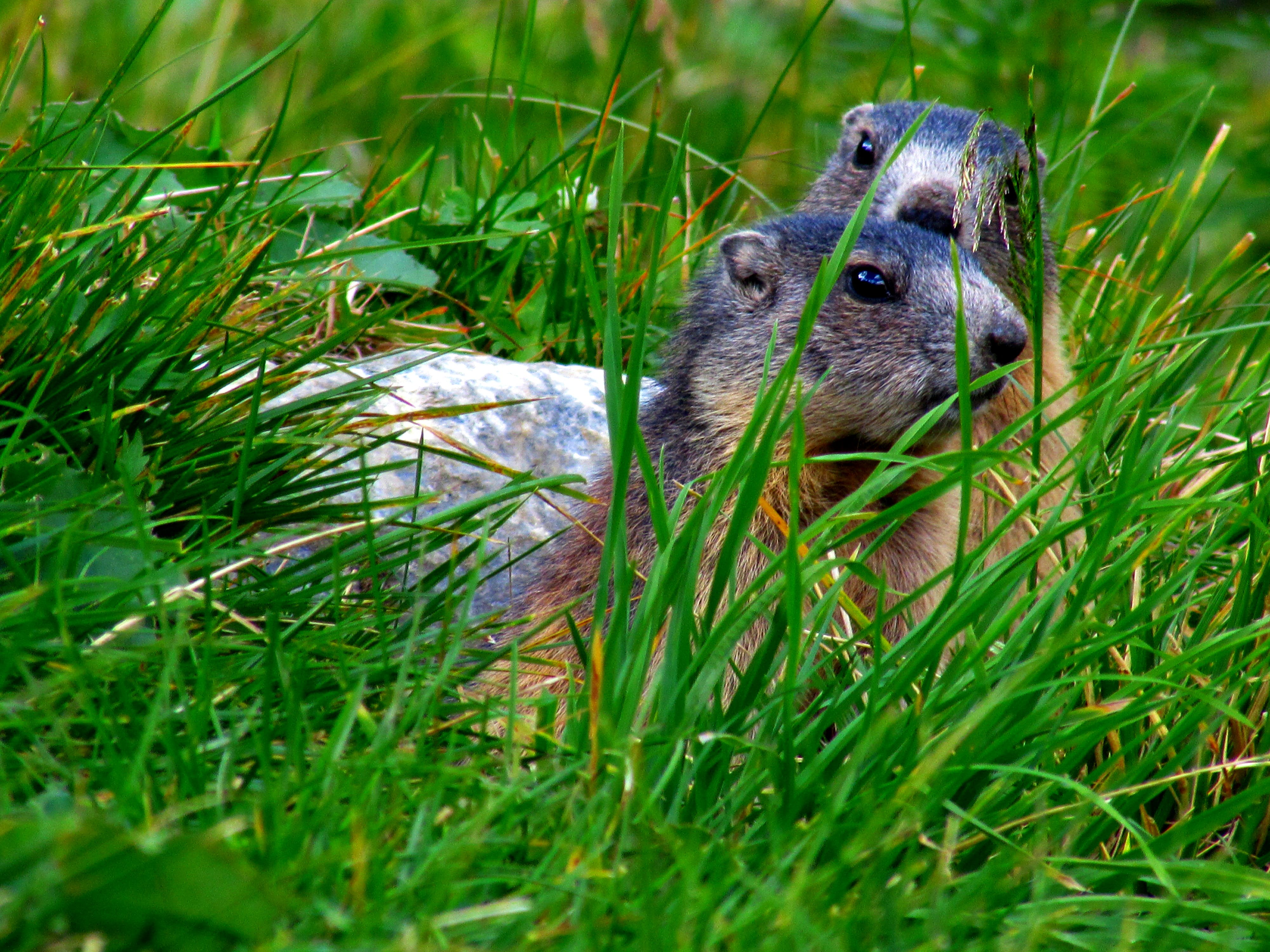 Two Squirrels on Grass Field