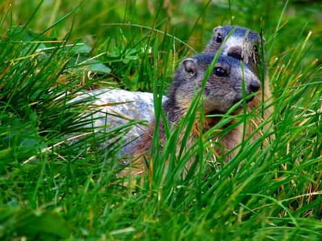 Free stock photo of nature, field, animal, grass
