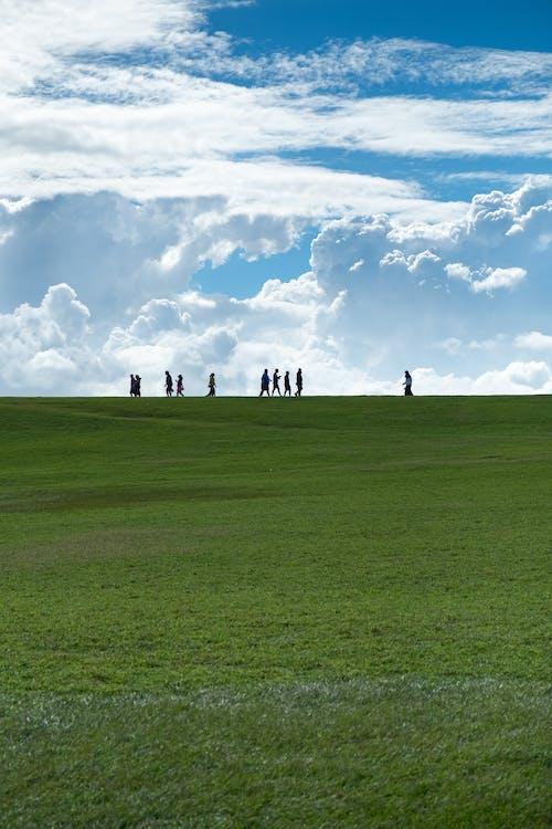 Бесплатное стоковое фото с дневной свет, за городом, зеленый, картина, изображающая небо