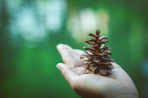 Foto d'estoc gratuïta de ambiental, desenfocament, flor, flora