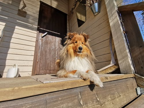 Free stock photo of cottage, dog, Finland