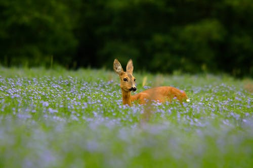 Photo Of deer On Flower Field