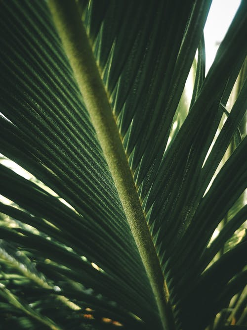 Green Leaves Of A Palm Tree
