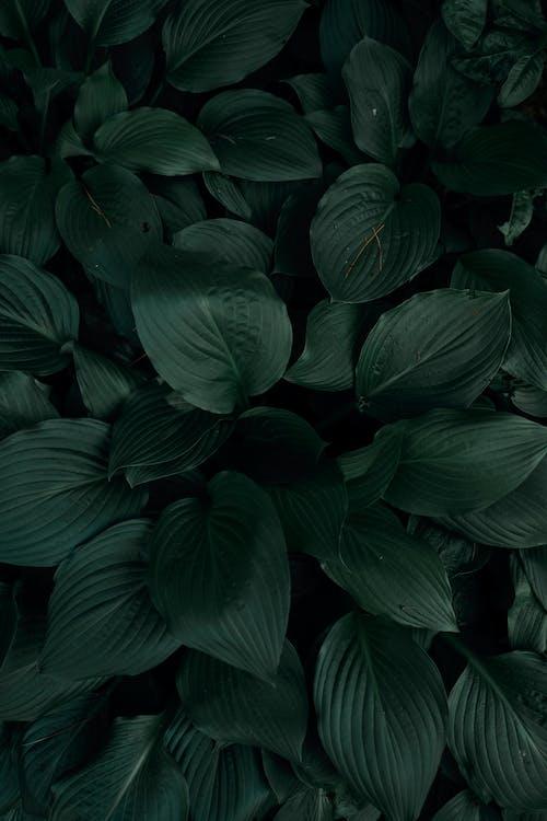 Dark Green Leaves of Plants