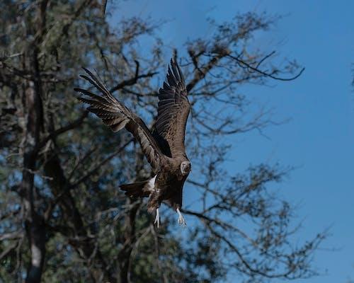 Kostnadsfri bild av fågel, gam, safari, vild