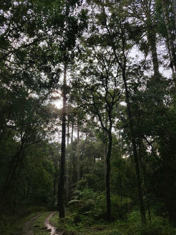 Tall Green Trees Under Sunny Sky