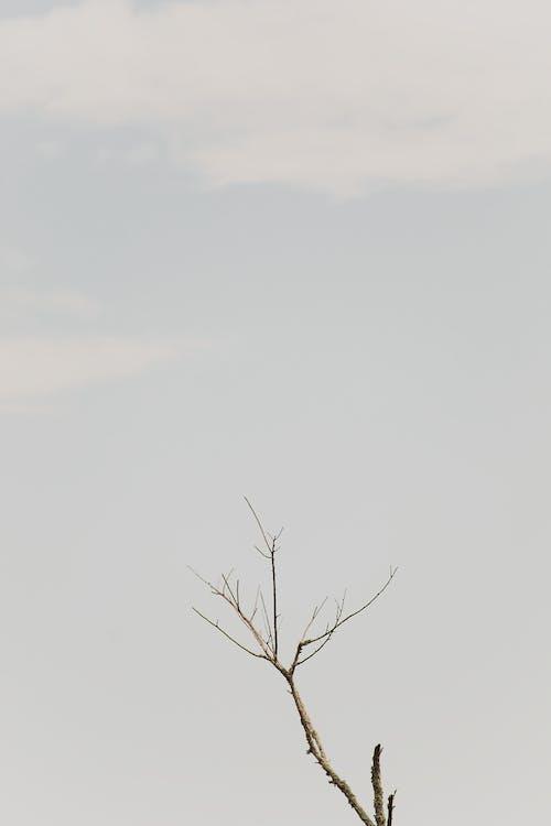içeren Ücretsiz stok fotoğraf