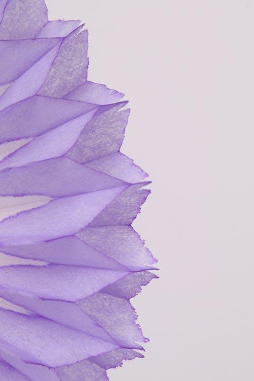 Δωρεάν στοκ φωτογραφιών με ζωηρόχρωμη επιτραπέζια διακόσμηση κυψελωτών παγώνι, λεπτομέρεια schoot