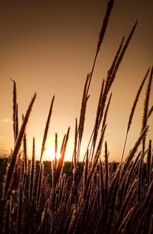 Immagine gratuita di agricoltura, ambiente, armonia