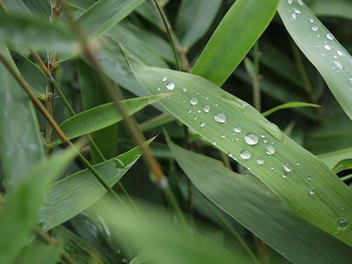 天性, 性質, 樹葉 的 免費圖庫相片