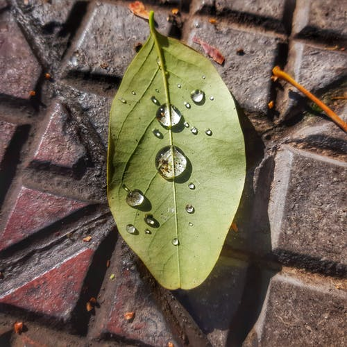 Free stock photo of after rain, after the rain, autumn