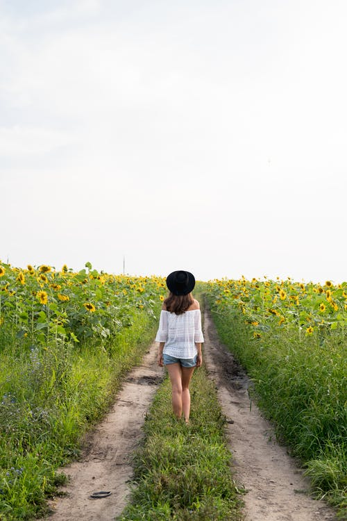 Woman in White Shirt Walking on Pathway Between the Sunflower Field