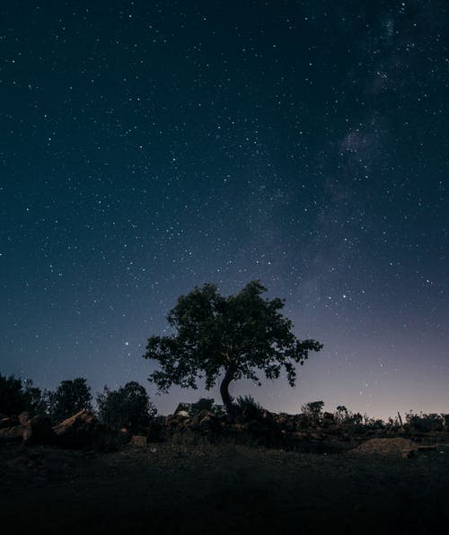 Tree against starry sky at night