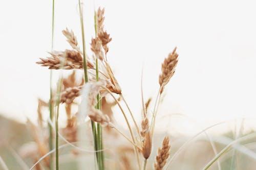 乾草, 吸管, 增長 的 免费素材图片
