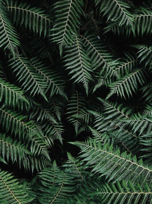 绿色蕨类植物在关闭摄影