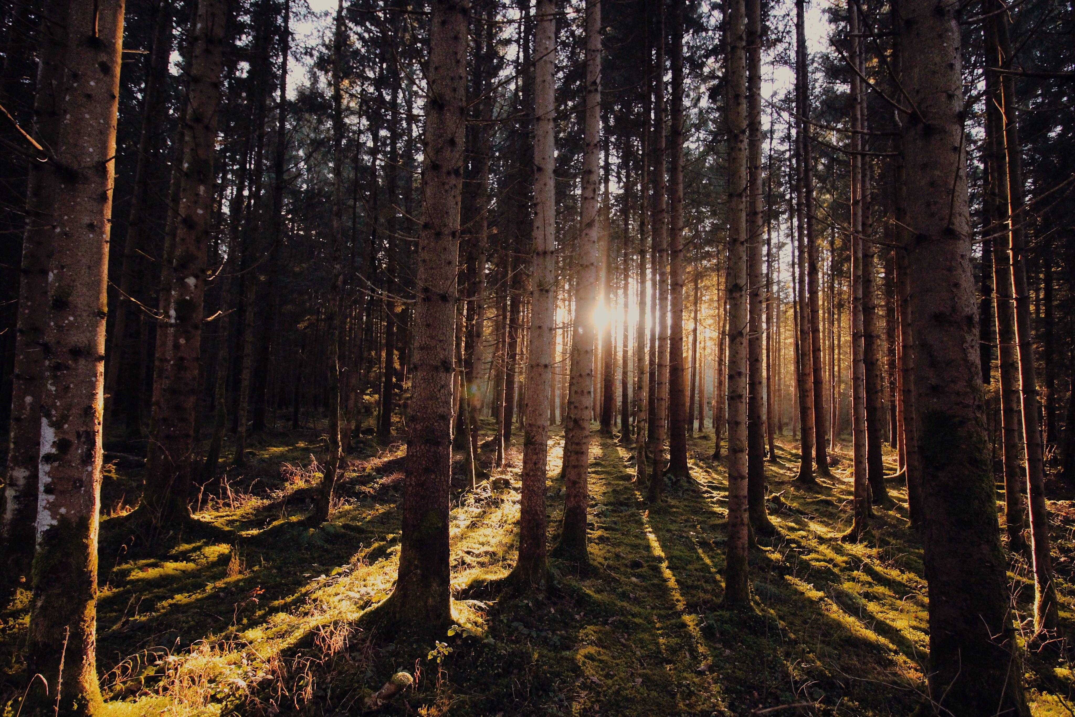 açık, ağaç gövdesi, ağaçlar, çevre içeren Ücretsiz stok fotoğraf