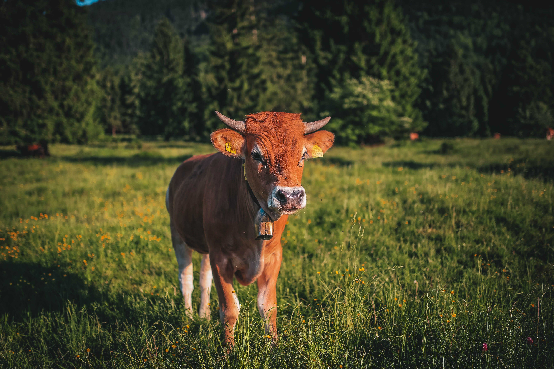 Gratis lagerfoto af bane, dagslys, dyr, gård