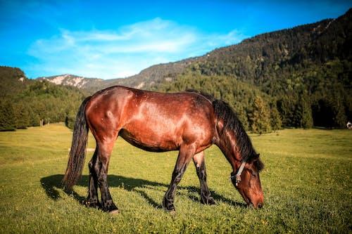 Fotos de stock gratuitas de animal, arboles, caballo, campo