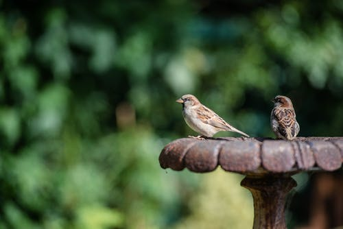 Small sparrows on metal construction in nature