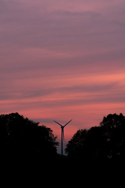 Silhouette of Trees and Wind Turbines during Sunset