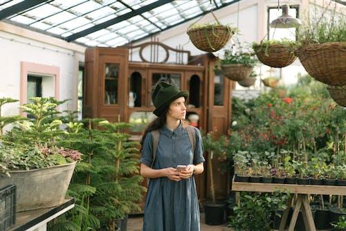 คลังภาพถ่ายฟรี ของ การทำสวน, การเจริญเติบโต, ความสด