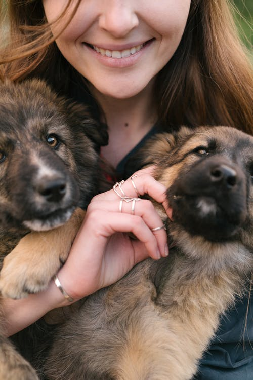 Person Holding Brown and Black German Shepherd