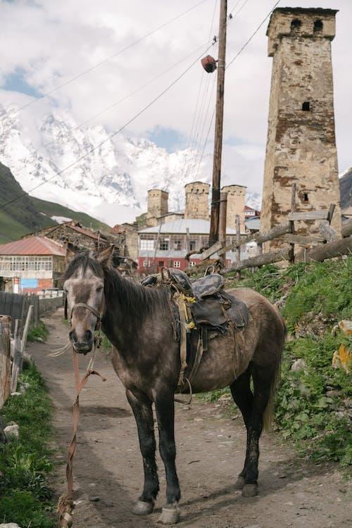 Photos gratuites de animal, animal domestique, bétail, campagne