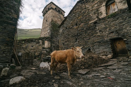 Brown Cow Standing Beside Gray Concrete Building