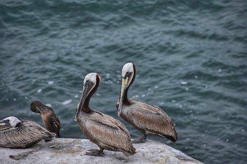 Základová fotografie zdarma na téma čeření, fotografování zvířat, křídla, moře