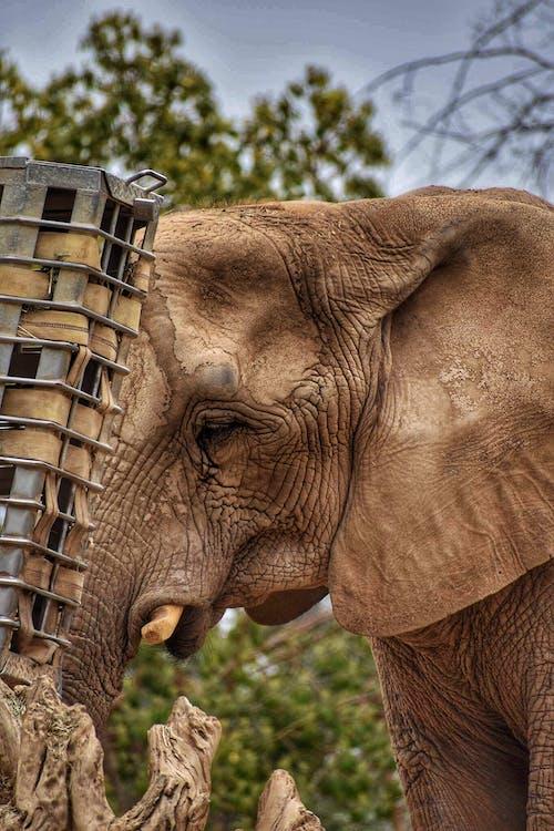 Gratis stockfoto met achtergrond, beest, dierenfotografie, dierentuin