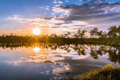 Бесплатное стоковое фото с вечернее солнце, вода, деревья, живописный