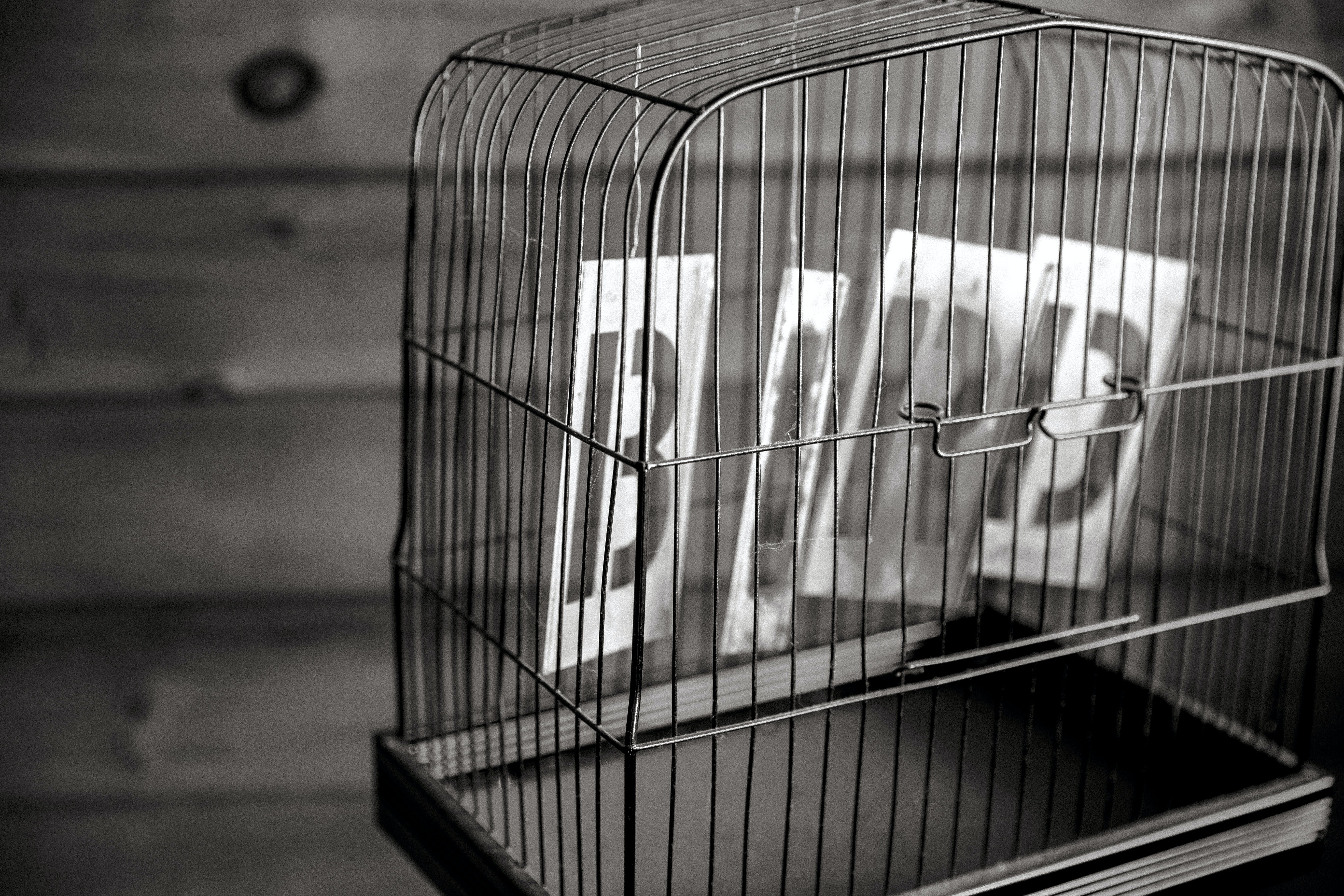 Grayscale Photography of Gray Birdcage Near Wall