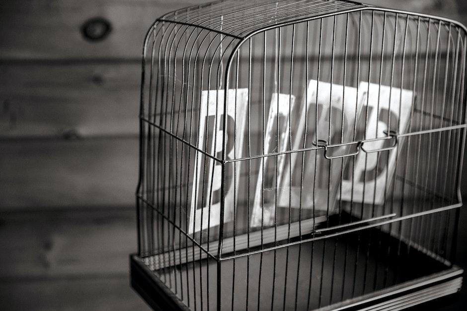 bird, birdcage, black-and-white
