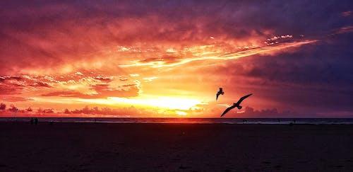 Free stock photo of amanecer, cielo, mar, naturaleza