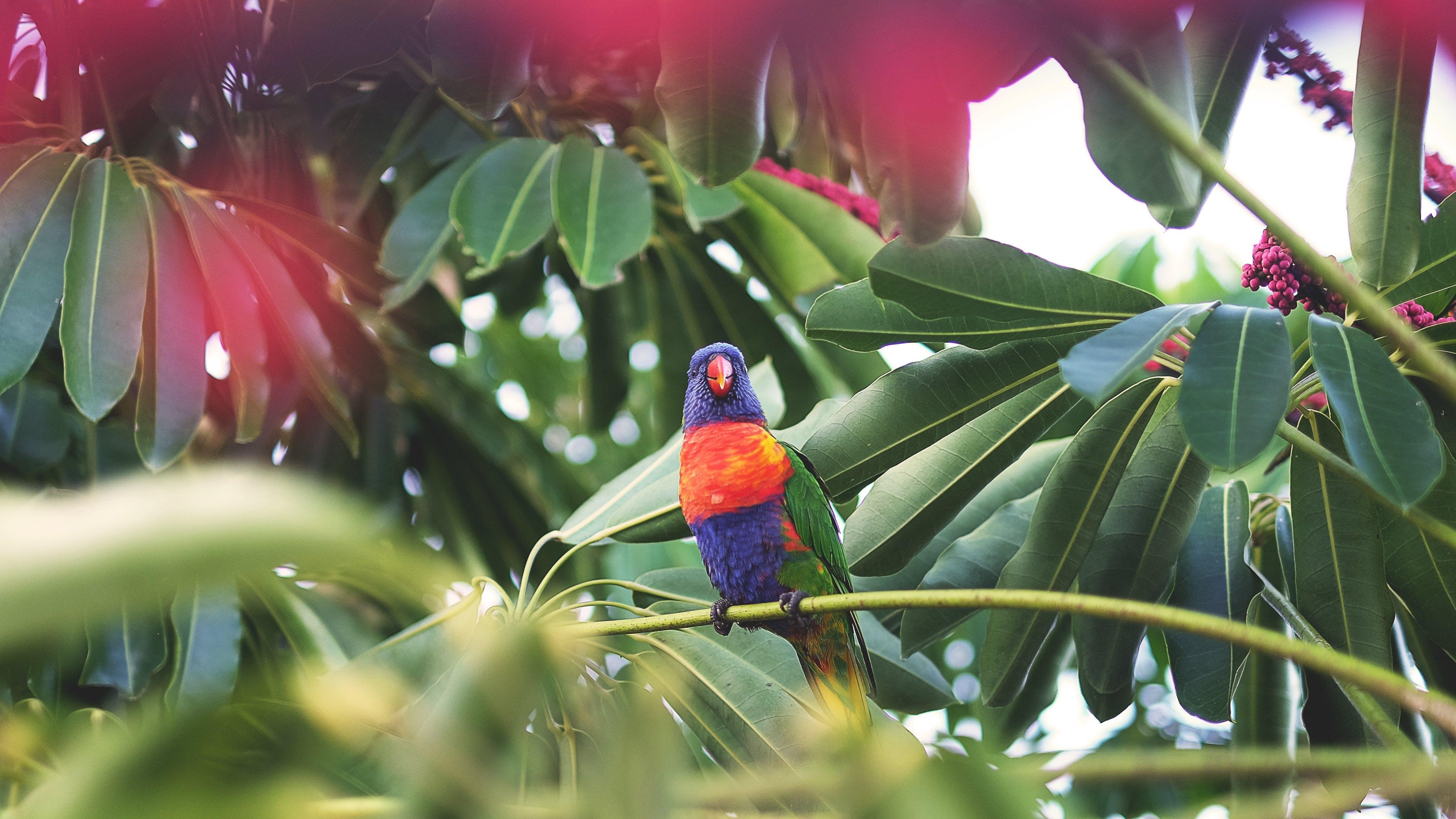 Free stock photo of animal, bird, colorful, exotic